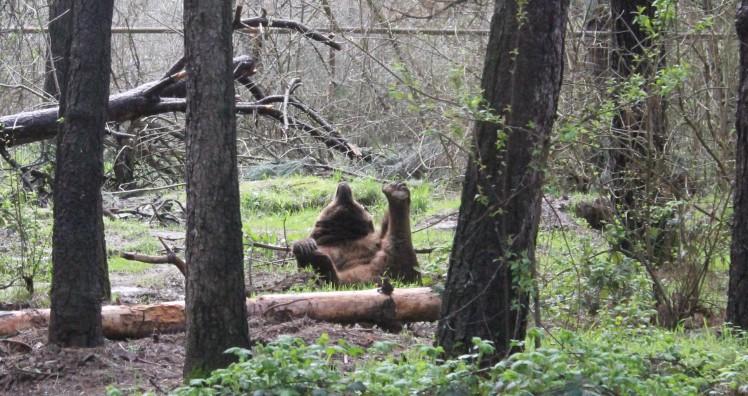 bear yoga